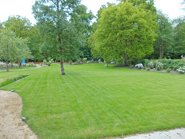 Lawn and soft landscaping